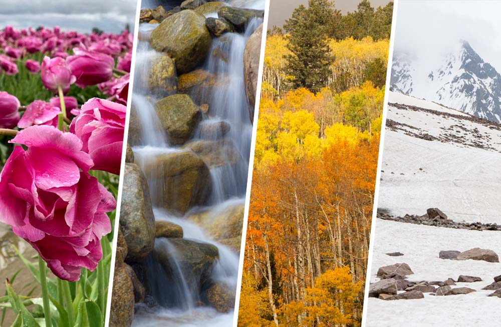 a composite image of four seasons - spring, summer, autumn and winter