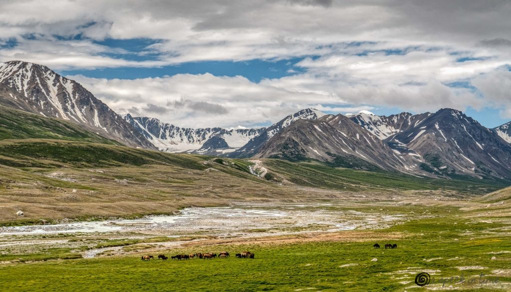 a group of horses in the meadow with river flowing through it and mountains in the background