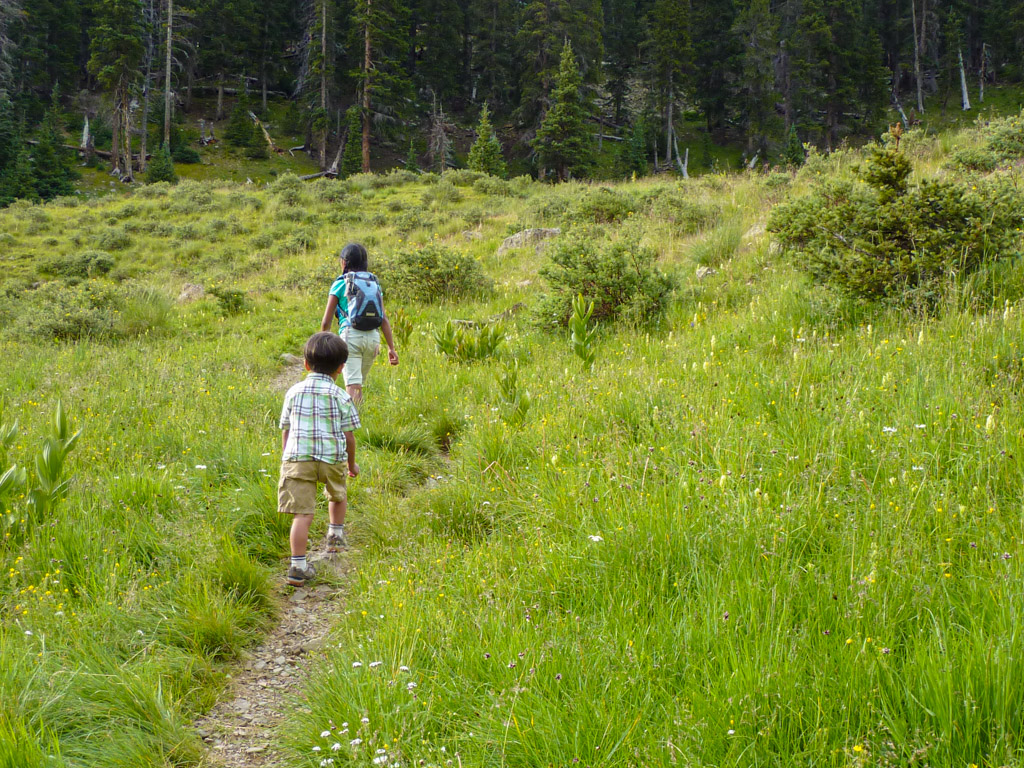 two children walking in the meadows