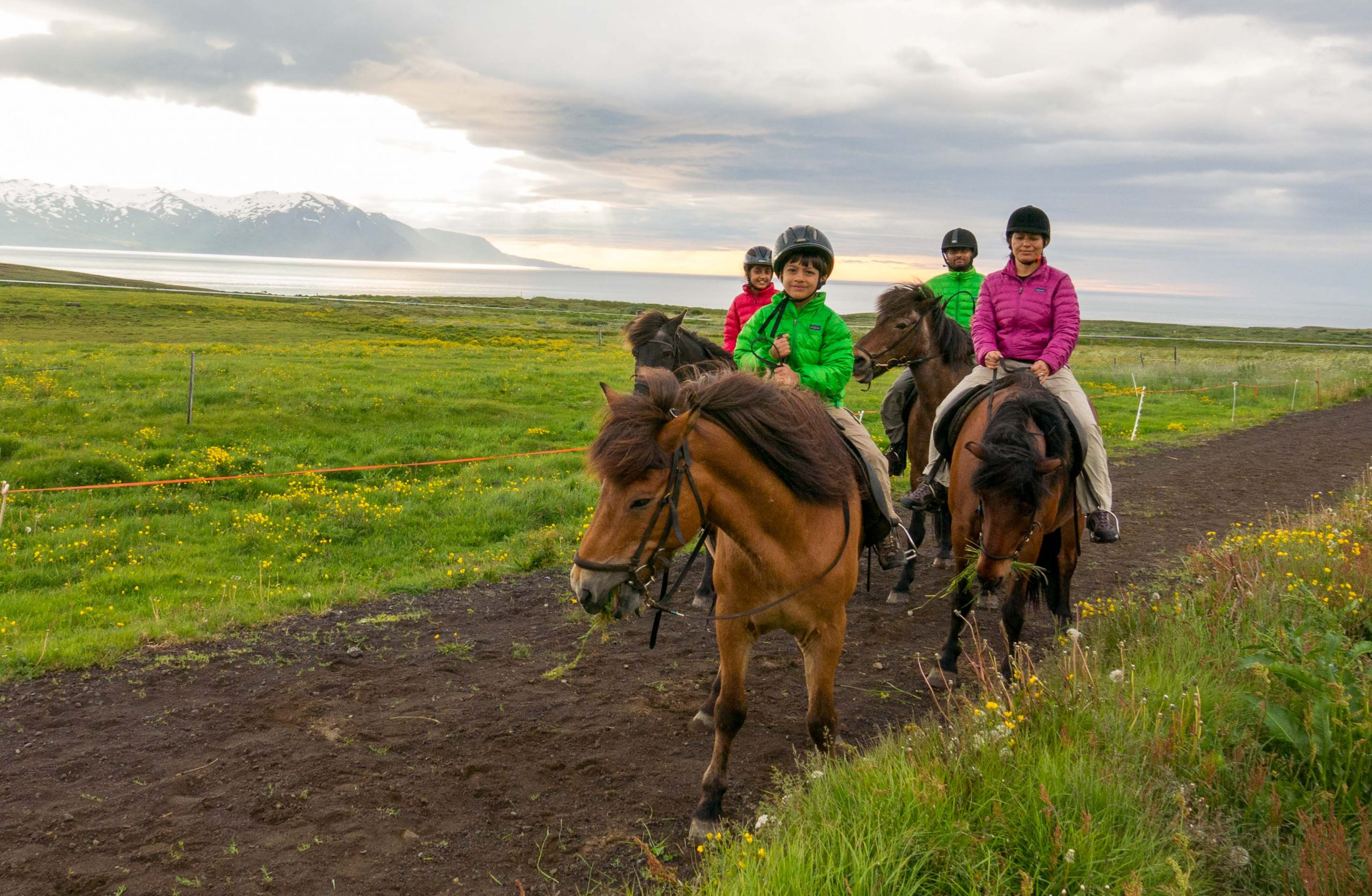 family of four riding icelandic horses on dirt path