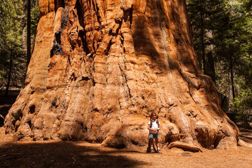 a girl standing in front of the giant sequoia tree
